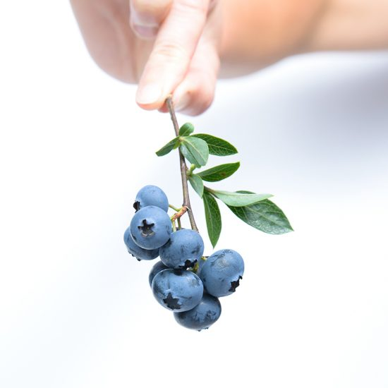 By week 7 of pregnancy, your baby is the size of a blueberry