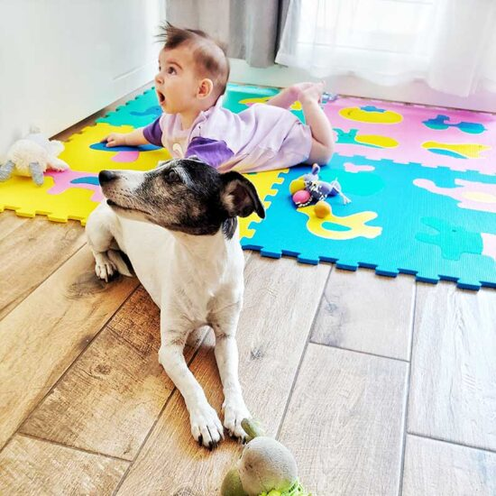 Baby has tummy time with family dog lying next to her